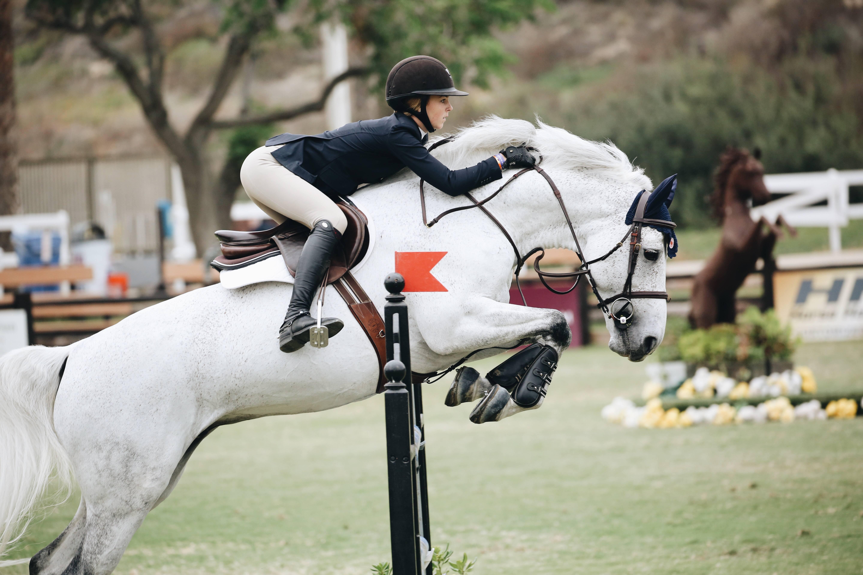 Anordna hästtävling